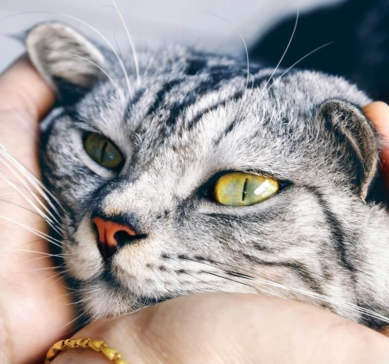Can Cats Sense Pregnancy? | OB-GYN Women's Centre
